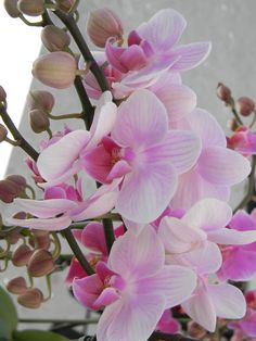 Pink Orchids photo by Mamaw J Farmers market 2013 Pink Orchids, Farmers Market, Hair Beauty, Plants, Photos, Pictures, Plant, Planets