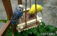 Diy Budgie Toys, Diy Bird Toys, Parrot Toys, Bird Crafts, Parrot Bird, Parakeet Care, Budgie Parakeet, Budgies, Homemade Bird Toys