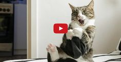 Is Nikita the Craziest Cat in the World?