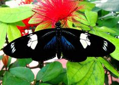 Butterflies Like Red by Carl Neufelder - 30 Beautiful Butterfly Pictures  <3 <3