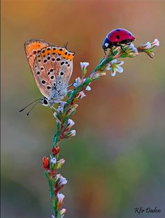 """This photo reminds me of the story """"The Very Grouchy Ladybug"""" by Eric Carle. So what do you think the ladybug is saying to the butterfly?"""