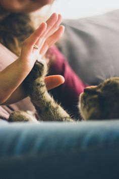 A Cat Giving a High FIve