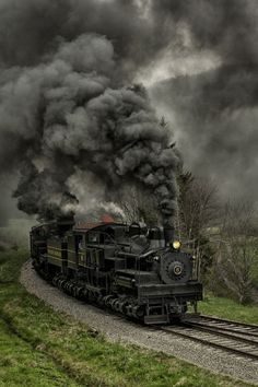 janetmillslove: Steam Rolling Black moment love. Wild Fauna Love