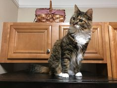 Safely on top of the refrigerator watching the vacuum cleaner. http://ift.tt/2svVStJ