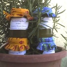 Rosmaringelee (Confit de romarin) Rezept | Küchengötter