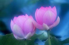 磐田の整体「氣の泉」:フォトセラピー