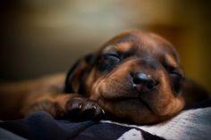 So sleepy. LOVE