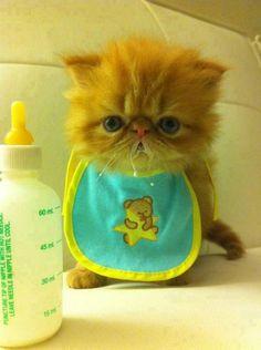 cute little fuzzball kitten........