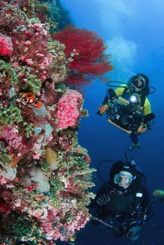 Batangas: Philippines has some of the best diving in the world.