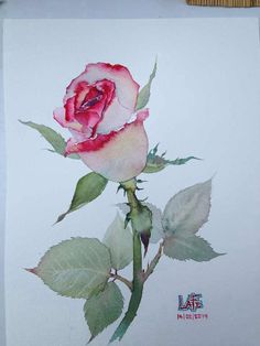 Watercolor rosebud by LaFe