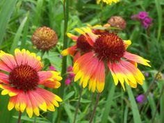 Spring+Flowers | Spring Flowers - 09