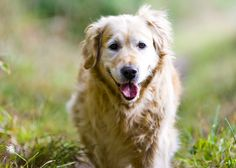 Keep your senior #cat or #dog healthy with these 7 tips: #VCAPets