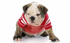 List of College Colors: Gear Your Pup Will Look Great In *GREAT list of college colors