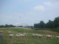 nesserdijk rotterdam