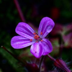 https://flic.kr/p/vXVMic | Gorgeous little flower after the rain.. #upsticksandgo #flowers #naturephoto #rain #purple #smallthings #instagood #michfrost #netherhouse #travel #unitedkingdom