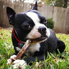 Tratamiento de la gingivitis en perros, ¿en qué consiste?