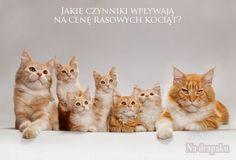 Dlaczego #koty rasowe są takie drogie?