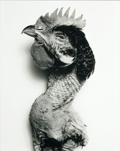 Irving Penn - Rooster (Black & White), New York, 2003 / Tirage argentique d'époque viré au sélénium (c) The Irving Penn Foundation