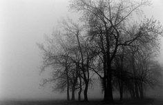 gloom