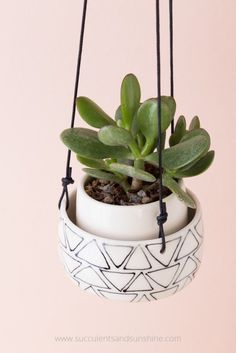 Keep your succulents growing their best by using well draining soil