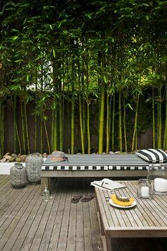 planter des bambous, un patio paisible, bambou vert planté
