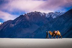 #Ladakh #Ladakhescapes #CamelSafari