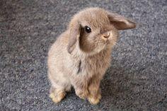Het liefste, meestpluizige konijnenras dat er bestaat!