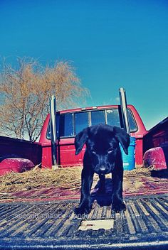 sweet farm pup