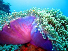 #Scuba #Diving - Scuba Diving in Romblon...