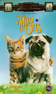 I got an orange tabby cat and named him Milo bc of this movie...my grandmama gave it to me...**~special~**