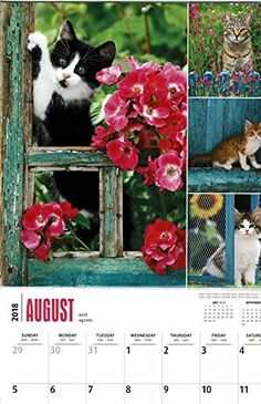 The wonderful cats pictured in our 2018 calendar are sure to bring warmth and charm to any room. Buy your 2018 Cat Lovers calendar from Purrfect Gifts Online today! Large Wall Calendar, Cat Calendar, Calendar Layout, Online Gifts, Paper Design, Cat Lovers, Pets, Room, Pictures