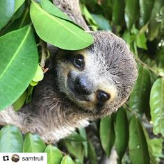 I frickin love sloths!!!!!