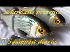 2f9419929 swimbait chronicles  how I made a gizzard shad glide bait