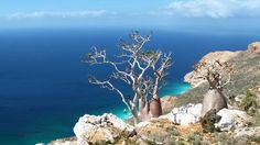 Different plants strange and rare in the western plains of Socotra