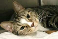 Brooklyn NY.  Lucky.  Neutered 4 yr old.  Dies in a.m.  See Pets on Death Row- Urgent Death on fb.