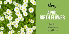 April Birth Flower Daisy Gemini Sign Tattoo, Sagittarius Tattoo Designs, Taurus Constellation Tattoo, Taurus Tattoos, April Birth Flower, Birth Month Flowers, Birth Symbols, Late Summer Flowers, Most Popular Flowers