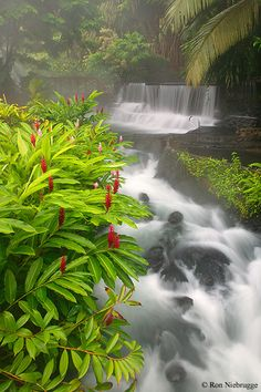 ✯ Tabacon Hot Springs - Costa Rica
