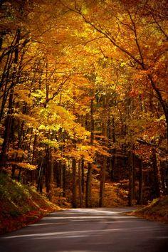 Golden by Rebecca O'Neal - Smoky Mountain National Park