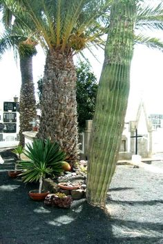 Cesar Manrique's grave, Haria, photo by Jill Pack