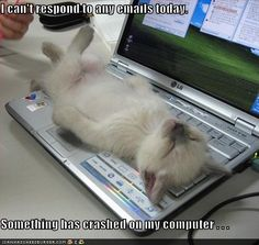 I can't respond to any emails today. Something has crashed on my computer...