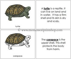 Turtle Nomenclature Book: illustrates and describes 10 Parts of the Turtle.