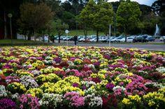 As flores na Cidade Universitária