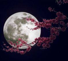 May 2014 is the Full Moon. It is known as the FLOWER MOON. Flowers are abundant everywhere. It is also known as the Full Corn Moon and Planting Moon. Purple Love, All Things Purple, Purple Colors, Purple Rain, Purple Stuff, Deep Purple, Dark Blue, Colours, May Full Moon