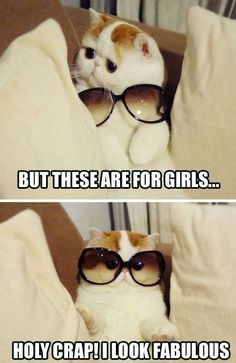 Funny cat wearing sun glasses.... (Click on picture to see more stuff)