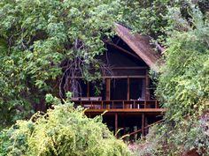 Pafuri Camp Out Of Africa, South Africa, Followers, Places To Visit, Boards, African, Camping, House Styles, Pictures