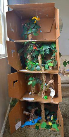 Rainforest layers Model