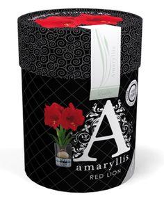€ 9,95 (incl. btw) Amaryllis Red Lion maat 28/30 in een klassiek vormgegeven koker. De koker is in een barok stijl vormgegen.  In de koker zit een rode Amaryllis, glazen vaas en stenen. Deze verpakking bevat alles om de Amaryllis in 6 tot 8 weken te laten bloeien. Het enige wat toegevoegd moet worden is water. Op de koker vind je de plantinstructies. Een mooie verpakking voor een groen cadeau.