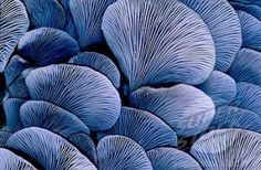 Oyster fungi. New Zealand by isabella