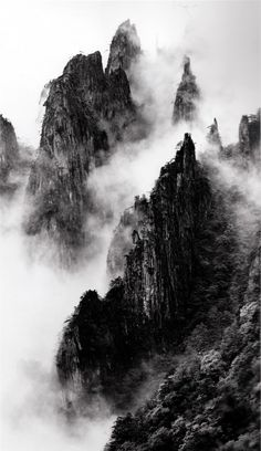 mountain forests w/trees; black/ white photography; fog