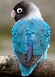 Qué tonos de azul!